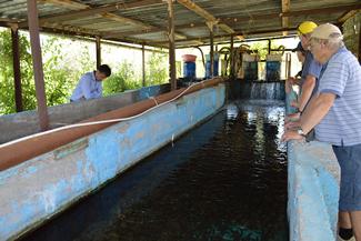 Deliberating at the Fish Farm